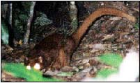 Borneoanimal